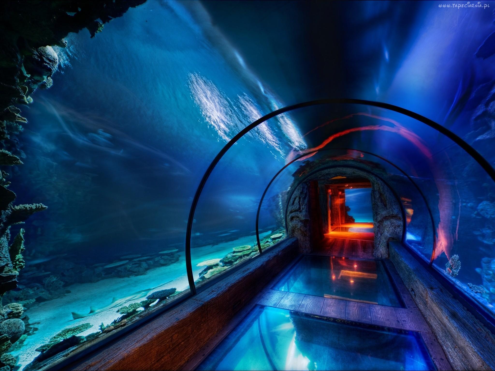 Co warto zwiedzić w Gdyni - akwarium w Gdyni