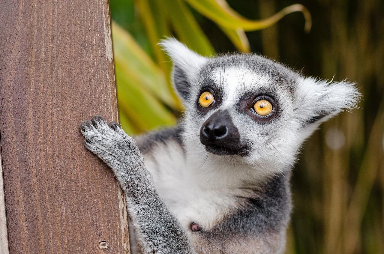 Co warto zwiedzić na Madagaskarze?